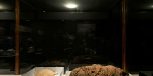 field mummy bundles