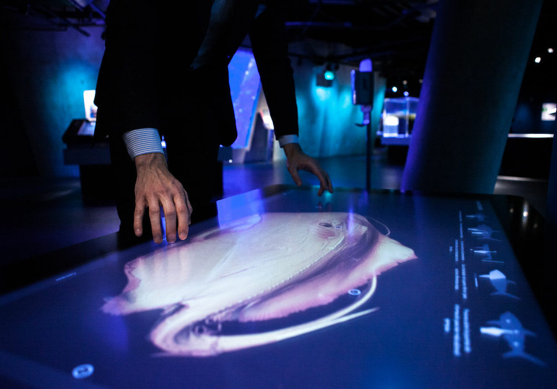 A man at The Phillip and Patricia Frost Museum of Science investigating a 3D-visualization of a southern stingray in Inside Explorer