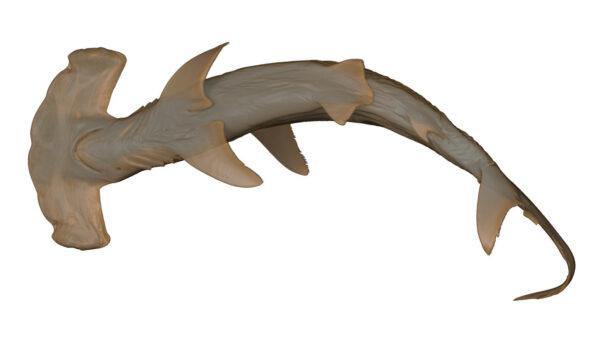 Shark_Hammerhead_05