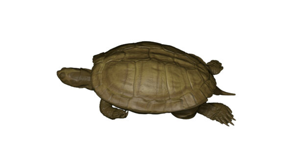 Turtle_a_02