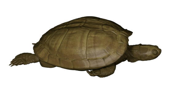 turtle_shell